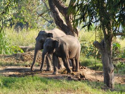 Zwei Elefantendamen
