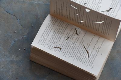 Der gemeine Bücherwurm