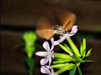 Flügelschlag