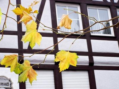 Herbstblätter und Fachwerk