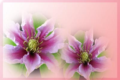Blütengruss
