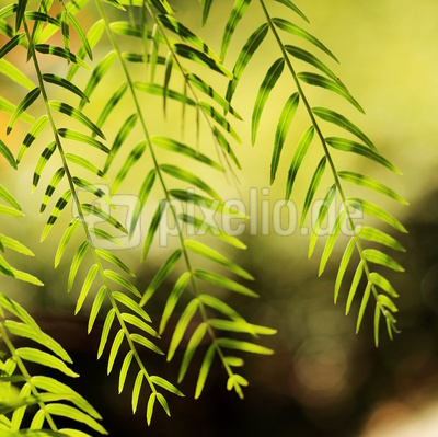 Grün und fein