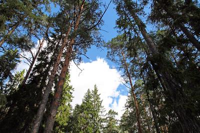 Estlands Wälder 2