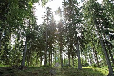 Estlands Wälder 4