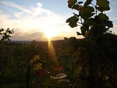 Abend im Weinberg