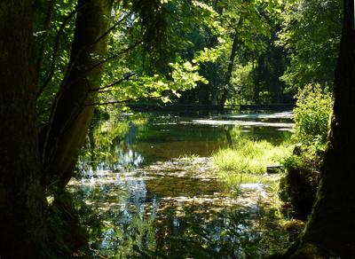 Waldbiotop mit Staubecken