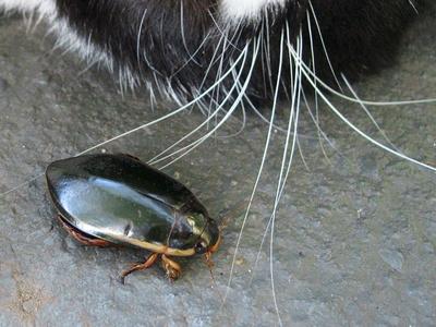 Käfer (von oben)