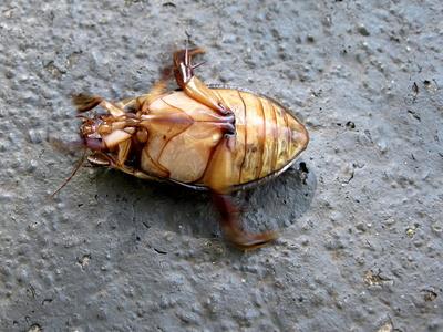 Käfer (von unten)