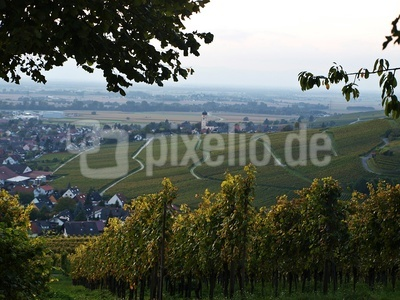 Weinlandschaft in Baden