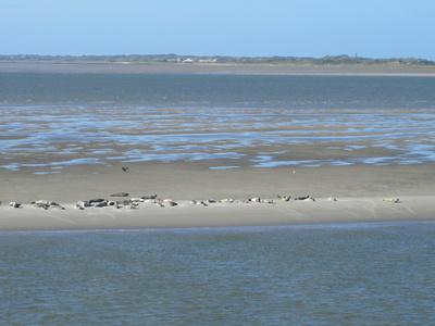 Nordsee Robbenbank