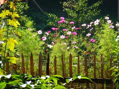 bunte Gartenstimmung