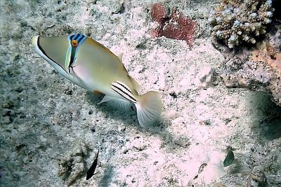 Picasso unter Wasser