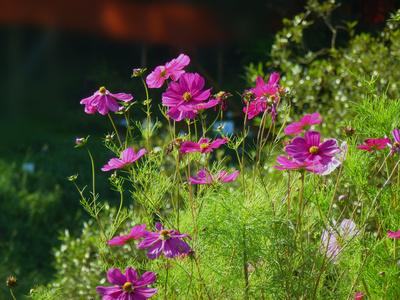 Zierliche Blüten im Morgenlicht