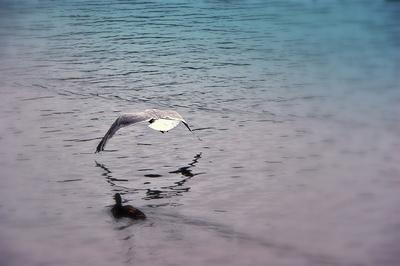 Flug über das Wasser