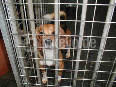 Hund eingesperrt