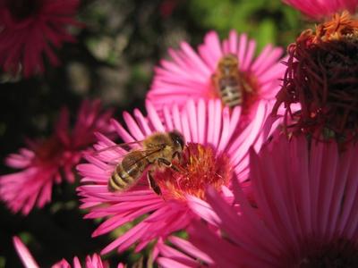 Noch einmal fleißig Honig sammeln...
