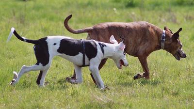 Hunde auf der Pirsch