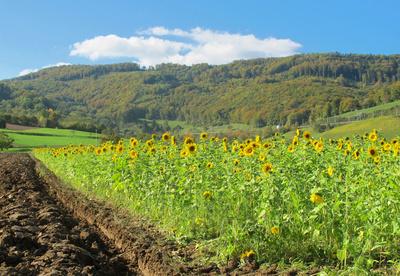 Landwirtschaft im Jura