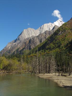 Tote Bäume im Fluss vor einem Berg
