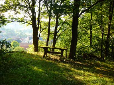Rastplatz im Wald 2