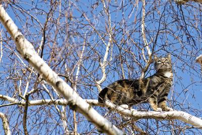 Katze hoch auf einem Baum
