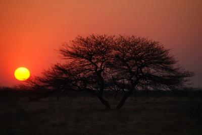 Sonnenuntergang im Etosha National Park