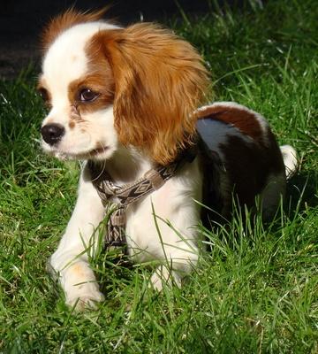 Oskar liebt Rasen