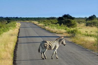 bei Zebrastreifen muss man anhalten...