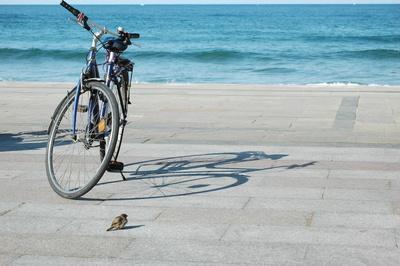 Spatz vor Fahrrad