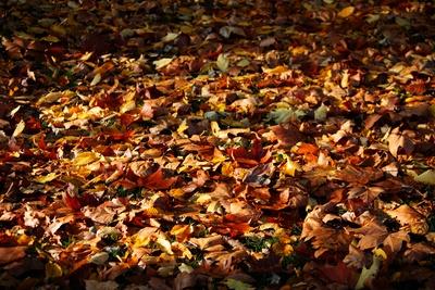 Noch mehr HerbstLich(t)
