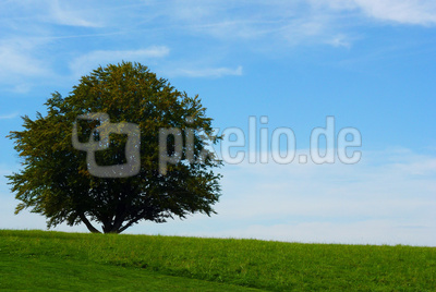 Mein Freund der Baum (Buche)