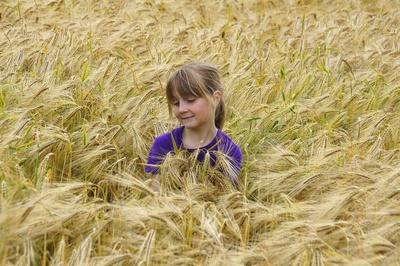 Kind im Gerstenfeld