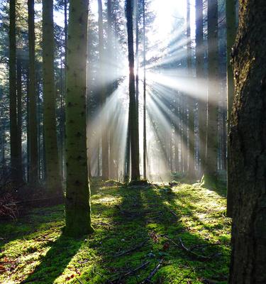 Im Nebelwald_hoch