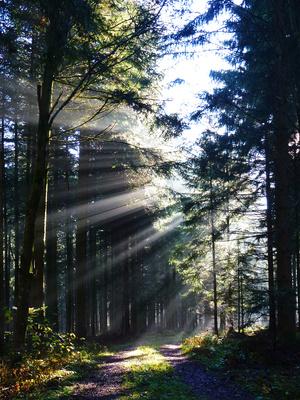 Nebelwald mit Weg_hoch