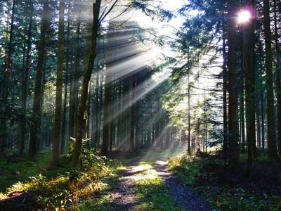 Nebelwald mit Weg_quer