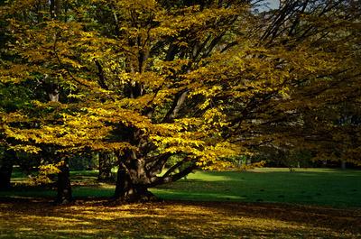 Goldener Herbst ...