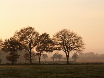 Herbstliche Landschaft im Ammerland Bild 2