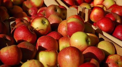 Äpfel 4