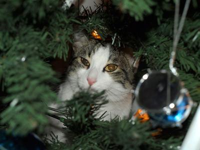 Weihnachtskater Timmy