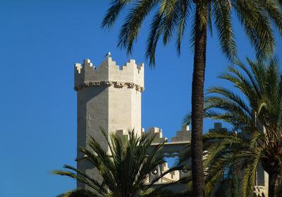 Mallorca - Turm, Taube, Palmen in Palma