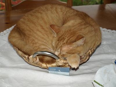 So entstand der Name: Katzenkorb