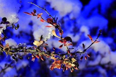 Im blauen Abendlicht