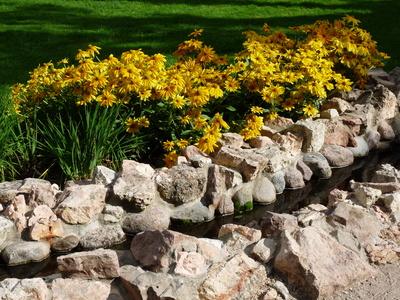 Gelbe Blumen am Wasser