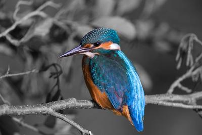 Farbenprächtiger Vogel