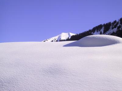 Winterweiss 2