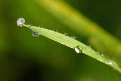 diamantbesetztes Gras