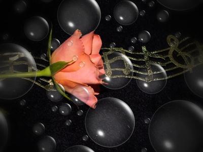Musikalische Rose