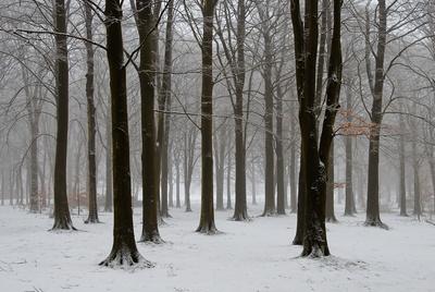 Winternebel quer
