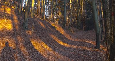 Leuchtender Wald
