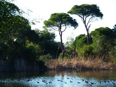 Biotop mit Teich, Enten und Kiefern